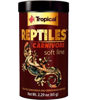 Reptiles Carnivore - Tropical