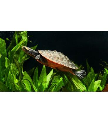 Tartarugueira Eco-Turtle - Aquapor