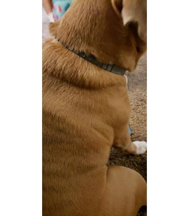 Coleira Antiparasitaria - Taberdog