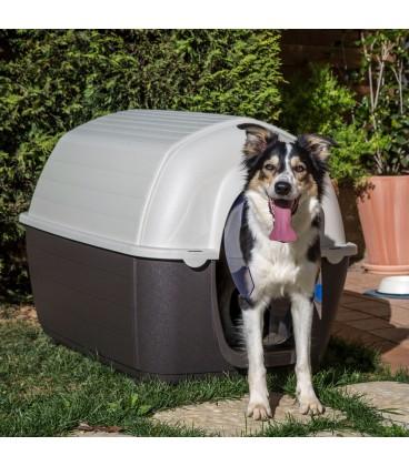 Kenny Casota para Cães